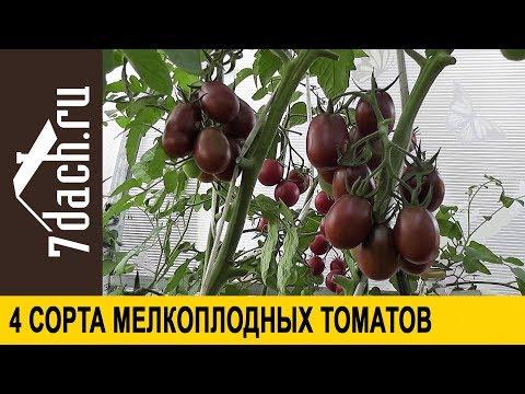 Сорта помидоров: 4 сорта мелкоплодных томатов - 7 дач | характеристики | урожайные | описание | томатов | лучшие | сорта | семь | дач_7 | дач | ру