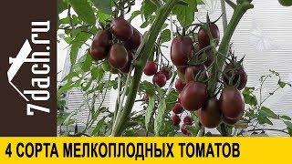 Сорта помидоров: 4 сорта мелкоплодных томатов - 7 дач