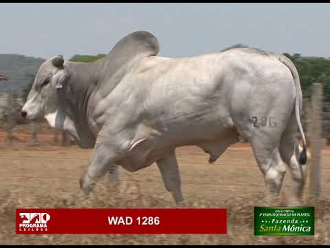 LOTE 16 - WAD 1286
