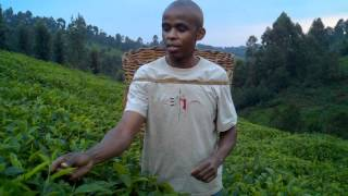 Peter, founder of Peak Coffee and Tea, at Grandparent's tea farm in Kenya