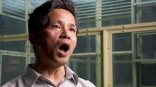 This Scientist Can Speak Chimp | Extraordinary Animals | BBC Earth