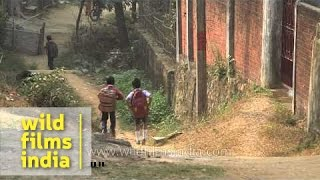 Assamese boy walks to school : morning routine in India