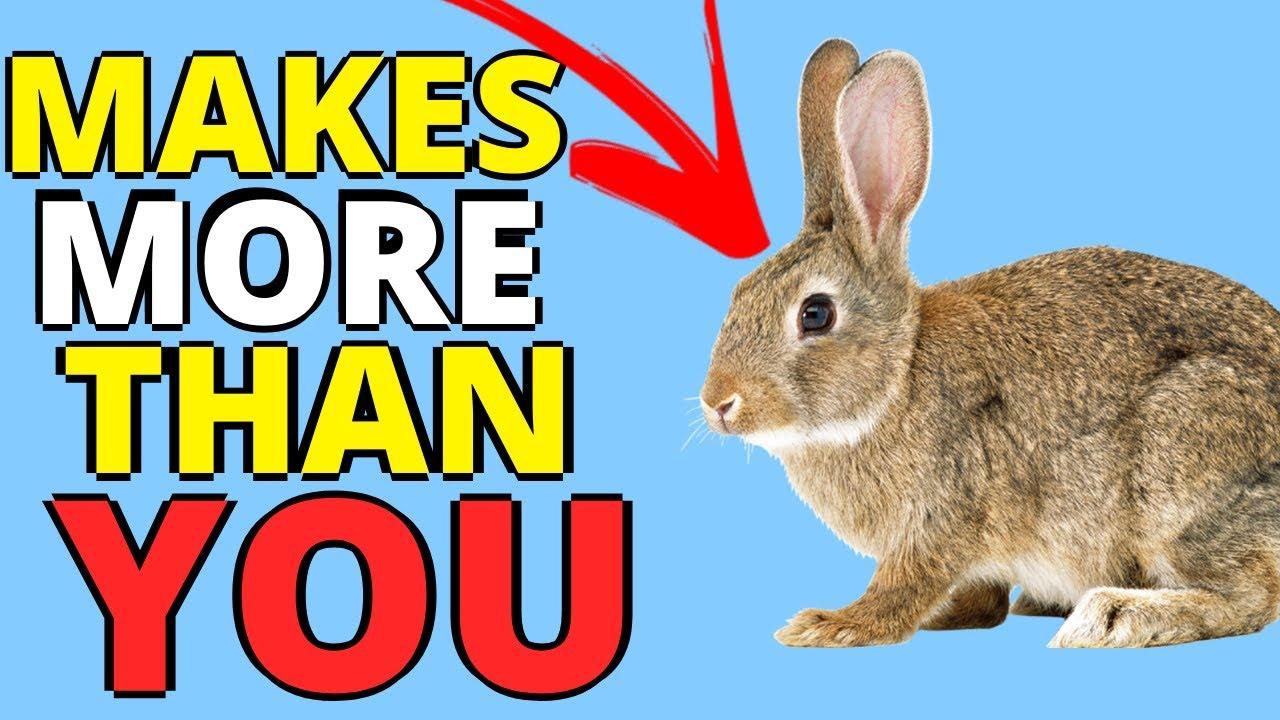 Watch This Bunny Make Money On Youtube - Make Money Online 2019