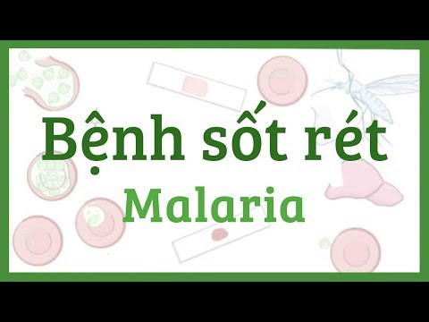Bệnh sốt rét - nguyên nhân, triệu chứng, điều trị, bệnh lý