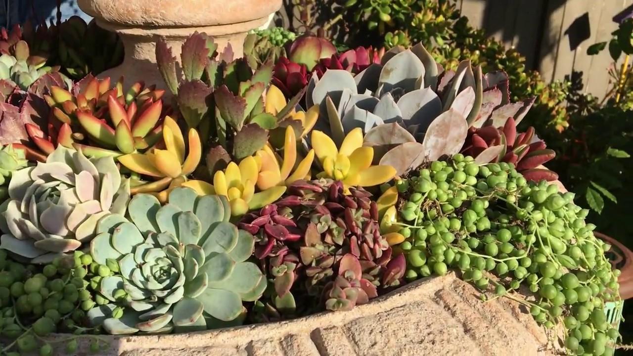 DIY Succulent Fountain - YouTube