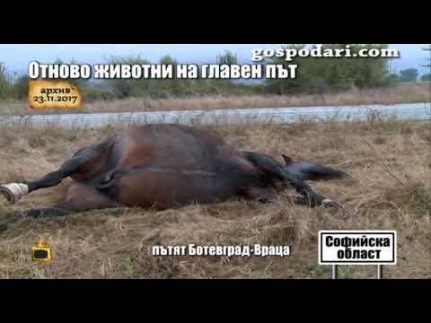 АПИ коментира пред Господарите животните, преминаващи по пътя