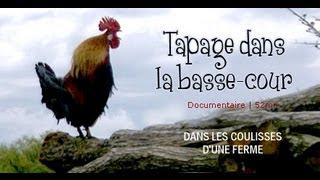 Tapage dans la basse-cour : Aventure à la ferme - documentaire animalier