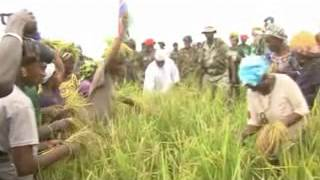 President Jammeh tours Vision 2016 farms in CRR - Day 1