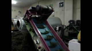 台灣高山茶的製茶流程(內文有說明):大禹嶺高冷茶初乾流程的影片。