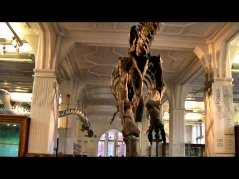 Tyrannasaurus Rex Stan Manchester Museum