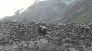 Пасём скот в горах Памира. Таджикистан. Ванч. Бунай.