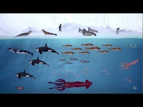 Ross Sea Food web
