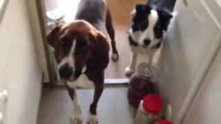 【befoer動画はこちら】 https://youtu.be/WQlIrgsq90k 保護犬から迎え...