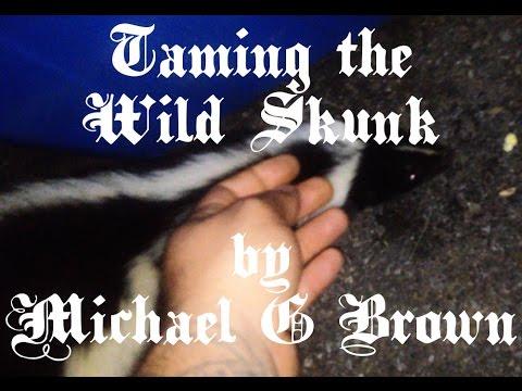 Taming the Wild Skunk