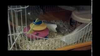 La vie de mes souris !