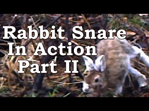 Rabbit Snaring ON TRAIL CAMERA! | Dodge, Dip, Dive, Duck And Dodge