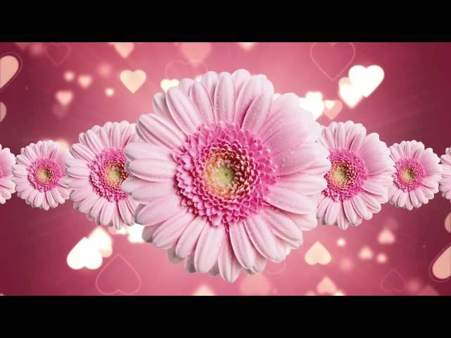 Free Flower Motion Backgrounds-Premium Wedding Video