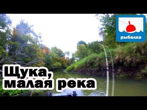 Особенности ловли щуки на малой реке, отчёт о рыбалке в сентябре