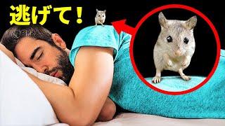 そのネズミ、実は危険!近くで見つけたらすぐに逃げよう