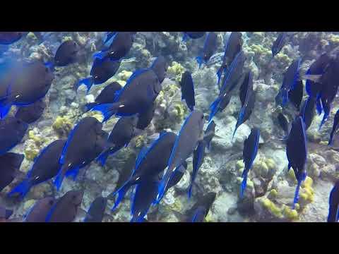 Grand Turk Diving Trip 2018