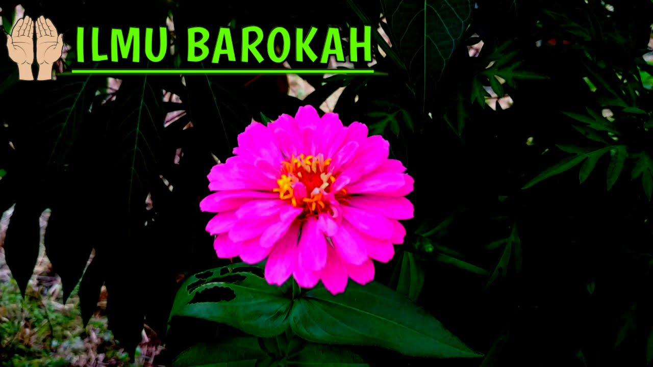 JARANG ORANG YANG TAU!! Amalan doa Kuat Zakar paling ampuh ...