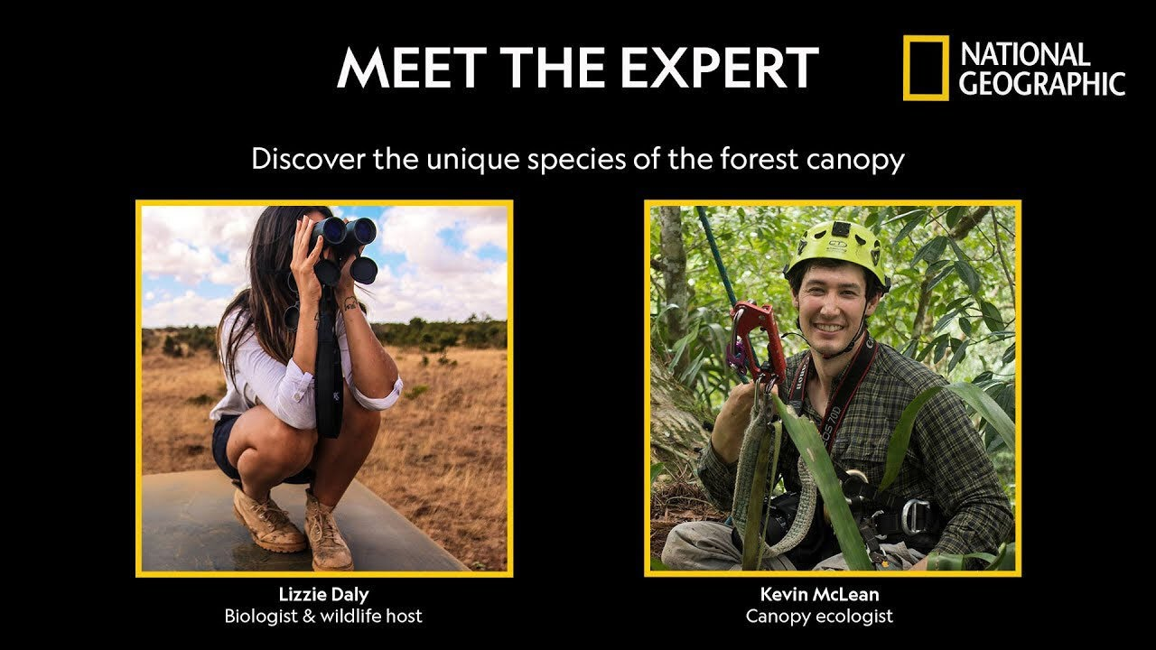 What is animal life like in the forest canopy? - Meet the Expert   National Geographic