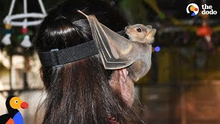 Woman Devotes Life To Rescuing Bats   The Dodo