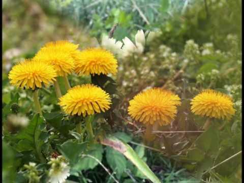 野に咲く花のように (cove)r    東亜樹