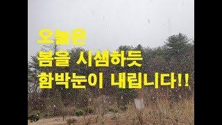 오늘은(3월23일) 입산을 저지하는^^ 함박눈이 쏟아집…
