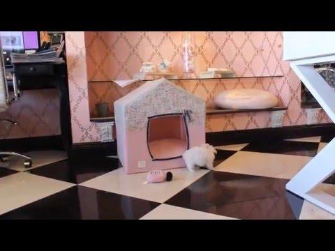 Beautiful Tiny Maltese Puppies - teacuppuppiesstore - www.TeacupPuppiesStore.com