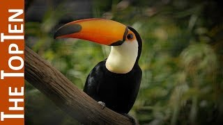 The Top Ten Most Beautiful Exotic Birds In The World