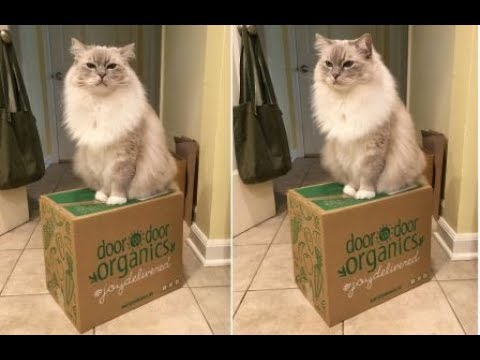 Organic Home Delivery: Door to Door Organics Coupon Code and Review - Floppycats