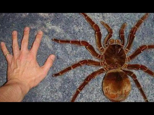 Incredible Spiders - National Geographic, Full Documentaries HD