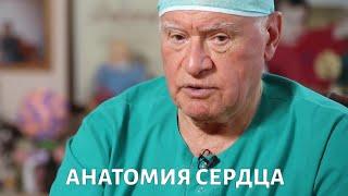 Доктор БОКЕРИЯ. Анатомия сердца