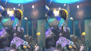 Two oceans Aquarium 3d side by side HD.mp4