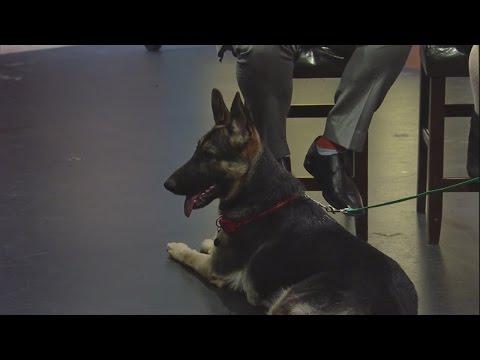 Vegas Shepherd Rescue 1/4/16