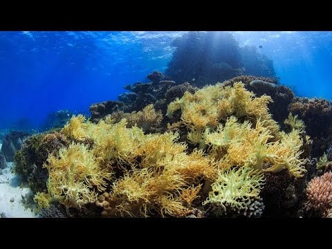 Is The Great Barrier Reef Recovering From Coral Bleaching?