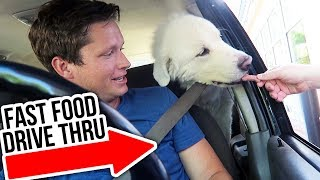 KODA'S PERFECT DAY - Super Cooper Sunday #196