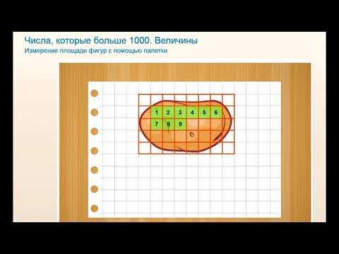 Как с помощью палетки измерить площадь фигуры