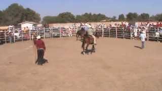 gran rodeo, en ejido cohuibampo 2013 rodeo che rios