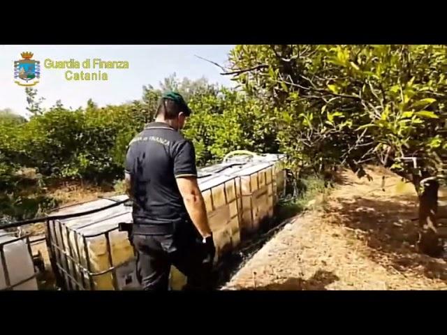 Droga nell'agrumeto nel catanese: un arresto [STUDIO 98]