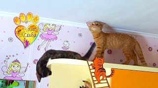 ЗаБеРись ДО ПоТоЛка!!! ЧеЛЛеНдж для КОТЯТ:) Смешные котята:)))