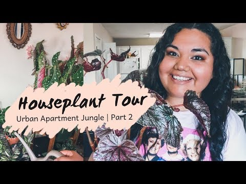 Houseplant Tour Part 2 | Low Light Urban Jungle of 100+ Plants