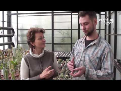 Кактусы  Неприхотливые виды   Коллекция ботанического сада ННГУ