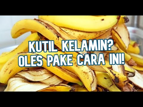 kutil-kelamin-dan-obat-herbal-nya-menggunakan-kulit-pisang-secara-alami