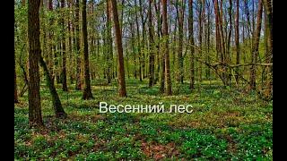 Коп по войне.Весенний лес. 1