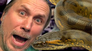 fear-of-snakes-how-to-overcome-it-brian-barczyk