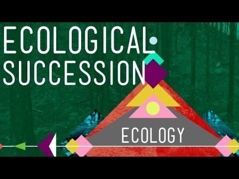 Ecological Succession: Change is Good - Crash Course Ecology #6