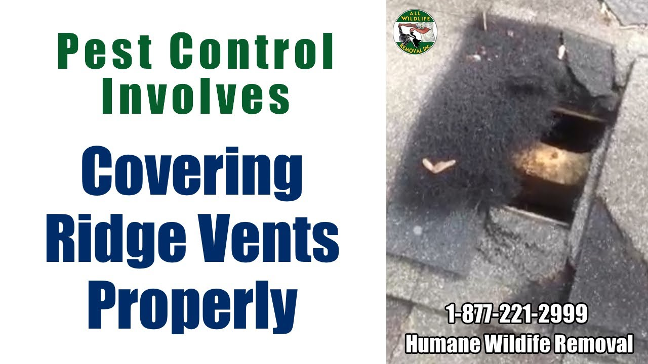 Cover Ridge Vents For Effective Pest Control Youtube