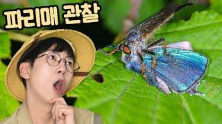 무시무시한 곤충사냥꾼 파리매 관찰!!